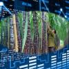 Các mã cổ phiếu ngành Mía Đường tốt trên sàn chứng khoán 2021